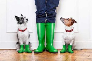 photos of two pet dogs standing next to owner's legs, all wearing bright green rain boots